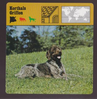 KORTHALS GRIFFON Dog Breed Wirehaired pointer 1975 1980 SAFARI ANIMAL