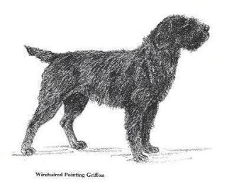 wirehaired pointing griffon in Collectibles