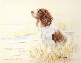 English Springer Spaniel Gun Dog RARE Sold Out Limited Edition Print