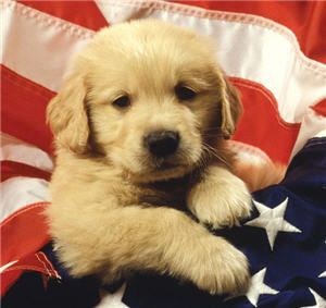 Golden Retriever Puppy in US Flag Mouse Pad Coaster New