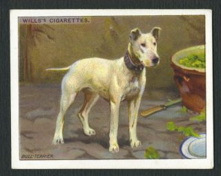 ANTIQUE 1914 ENGLISH BULL TERRIER WILLS LARGE DOG SERIES CIGARETTE