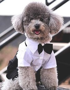 New Lovely Small Pet Dog Puppy Tuxedo shirt suit Party Wedding outfit